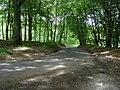Lane in The Alders Woods - geograph.org.uk - 879801.jpg