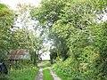 Lane leading to Bryn-yr-Eryr - geograph.org.uk - 243563.jpg