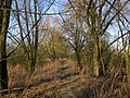 Lek river. Riverbank forest near Gelkenes, South Holland, Netherlands - panoramio.jpg
