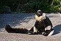 Lemur (25082140567).jpg