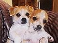 Leo & Lucky Dogs - Walnut Creek CA by TOM - panoramio.jpg