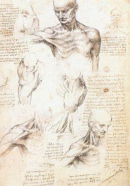 Leonardo da vinci, studi anatomici 1509-1510