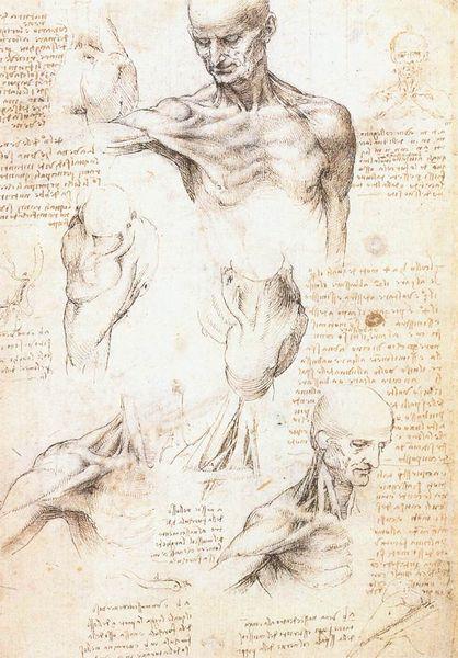 File:Leonardo da vinci, studi anatomici 1509-1510.jpg