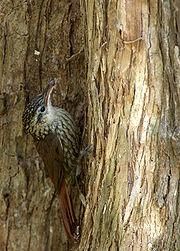 Lista de aves do Brasil – Wikipédia f43872163d2
