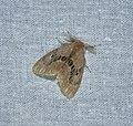 Lepidoptera (36951239192).jpg