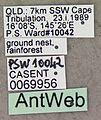 Leptomyrmex unicolor casent0069956 label 1.jpg