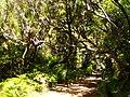 Levada 25 Fontes, Madeira, Portugal, June-July 2011 - panoramio (2).jpg
