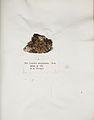 Lichenes Helvetici IX X 1833 017.jpg