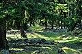 Lilla Bjärs gravfält Stenkyrka 26 1 Gotland.jpg