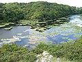 Lilly Ponds Bosherston - panoramio.jpg