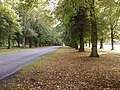 Lime tree avenue,clumber park - panoramio (1).jpg