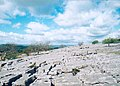 Limestone Pavement Holmepark Fell - geograph.org.uk - 125088.jpg