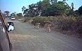 Lions at Samburu.jpg