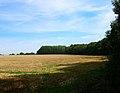 Little Heath Plantation - geograph.org.uk - 236296.jpg
