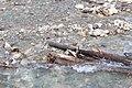 Little Yoho River IMG 4789.JPG