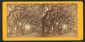 Live Oak Avenue, Bonaventure Cemetery, Savannah, Ga, from Robert N. Dennis collection of stereoscopic views 10.png