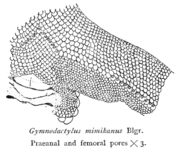 Pores on the skin are often used in classification