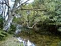Loch Achilty - geograph.org.uk - 47488.jpg