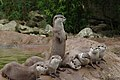 London zoo, UK (3712586734).jpg