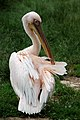 London zoo, UK (3712590194).jpg