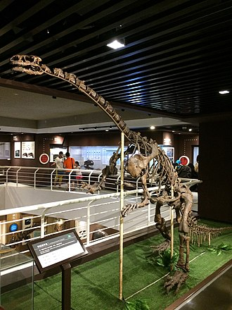 Lufengosaurus - Holotype of L. huenei on display at the Paleozoological Museum of China.