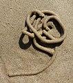 Lugworm cast 2.jpg