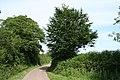 Luppitt, lane to Combeshead - geograph.org.uk - 187297.jpg