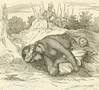 Lyncoya Jackson with his dead mother.png