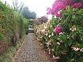 Madeira - Funchal - Jardim Botanico (2092830909).jpg