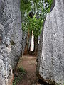 Major Stone Forest space in formations 05.JPG