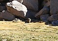 Mammals (48338320636).jpg