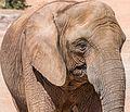 Mammals in Oasis Park 2016 06.jpg