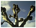 March Denzlingen - Master Season Rhine Valley Photography - panoramio.jpg