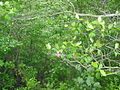 Mason Neck State Park - fauna.jpg