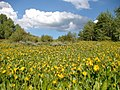 Meadow below the Bull Run Mountains, Looking E, Elko Co., NV - panoramio.jpg