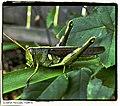 MegaHopper - Flickr - pinemikey.jpg