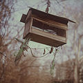 Melancholical Birds Feeder.jpg
