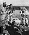 Members of the University of Washington Fisheries team collect specimens from dock, Amen Island, 1947 (DONALDSON 48).jpeg