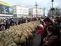 Merino Madrid 2010 2.JPG