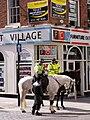 Merseyside Police Horse.jpg