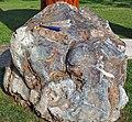 Metamorphosed pillow basalt (Ely Greenstone, Neoarchean, ~2.722 Ga; large loose block at Ely visitor center, Ely, Minnesota, USA) 6 (21462024751).jpg