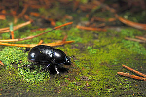 Nature photography - Nature photography includes images from both large and small subjects. Photo of a beetle using focal length of 60 mm and a shutter speed of 1/320 second