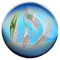 Microorganisms in a drop of seawater.jpg