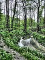 Mikolow, Poland - panoramio (177).jpg