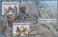 Misliya Cave Mount CarmelHE.png