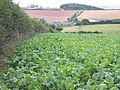 Mixed Agriculture near Crebar Farm - geograph.org.uk - 50141.jpg
