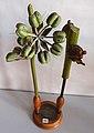 Modell von Quercus robur (Quercus pedunculata, Stieleiche) -Brendel Nr. 10-.jpg