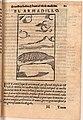 Monardes Armadillo 1574.jpg