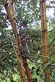 Monkey female.JPG