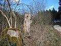 Moos auf abgestorbenen Bäumen - panoramio.jpg